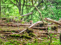 Content Fox Pup in the Woodland Den