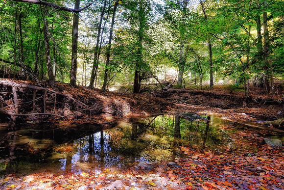 Reflections in the Deep Woods